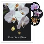 Orchids on Black Personalized Note Cards