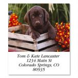 Brown Lab Puppy In Crate Select Address Labels