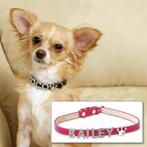 Jeweled Name Personalized Dog Collar