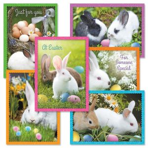 Photo Bunny Cards