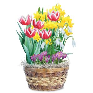 Colorful Delight Bulb Garden Gift Basket  Sold Out