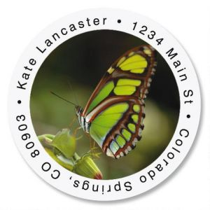 Malachite Butterfly Round Address Labels