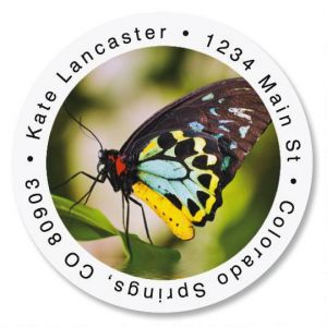 Yellow Body Butterfly Round Address Labels
