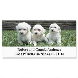 Bichon Deluxe Address Labels