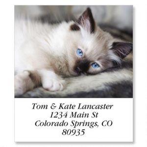 Old Blue Eyes Select Address Labels
