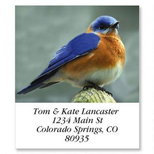 Eastern Bluebird  Select Address Labels