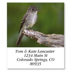 Eastern Wood Pewee  Select Address Labels