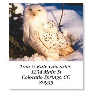 Owls Select Address Labels  (12 Designs)
