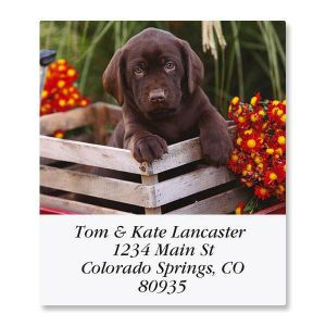 Doggone Fascinating  Select Address Labels  (12 Designs)
