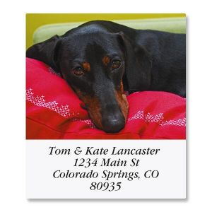 Dachshund Select Address Labels  (6 Designs)
