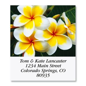 Plumeria Flowers Select Return Address Labels (6 Designs)