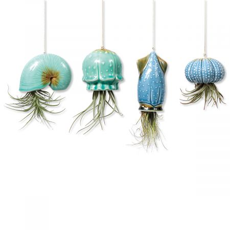 Hanging Air Plant Shell Pots