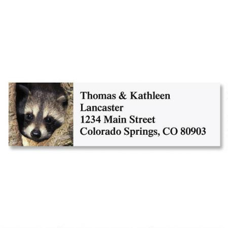 Young Raccoon Address Labels