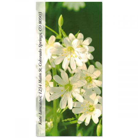 Chickweed Oversized Address Labels