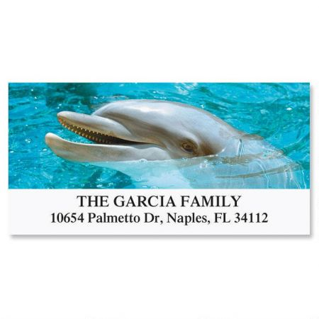 Dolphins  Deluxe Return Address Labels