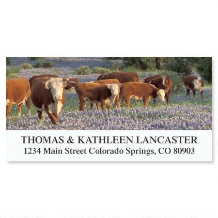 Colorful Grazing Address Labels
