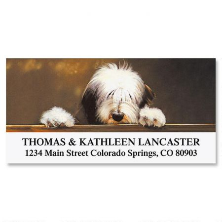 Bearded Collie  Deluxe Return Address Labels