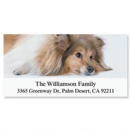 Sheltie Deluxe Return Address Labels