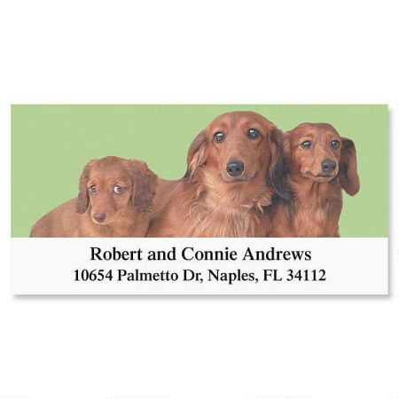 Dachshund Deluxe Address Labels