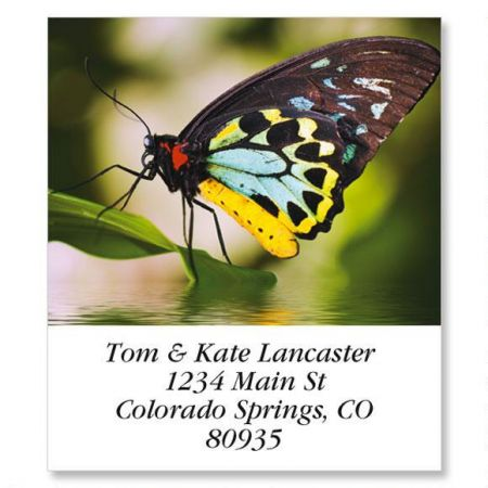 Yellow Body Butterfly Select Address Labels
