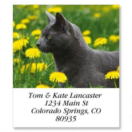 Dandy Cat Select Address Labels