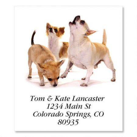 Chihuahuas  Select Return Address Labels
