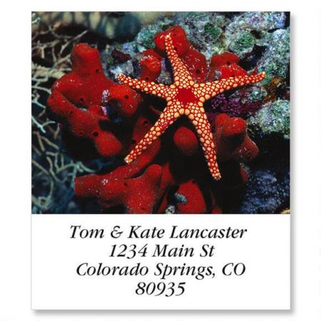 Marble Star Select Return Address Labels