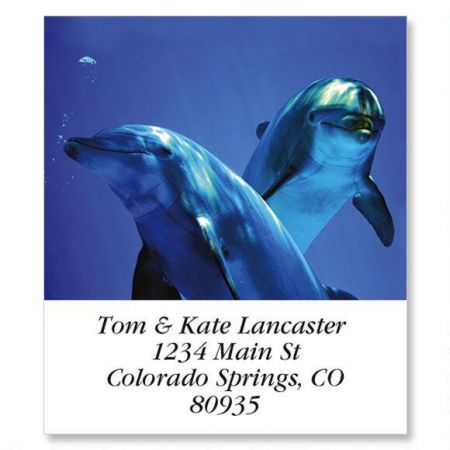 Curious Dolphins Select Return Address Labels