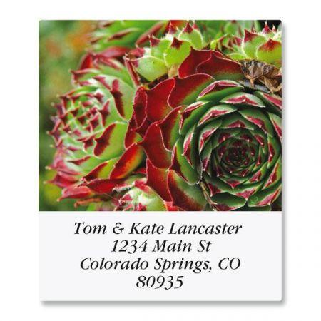 Cactus Flower Select Return Address Labels  (12 Designs)