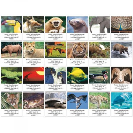 Animal Lives Select Address Labels  (24 Designs)