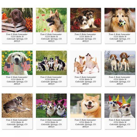 Doggone Fascinating  Select Return Address Labels  (12 Designs)