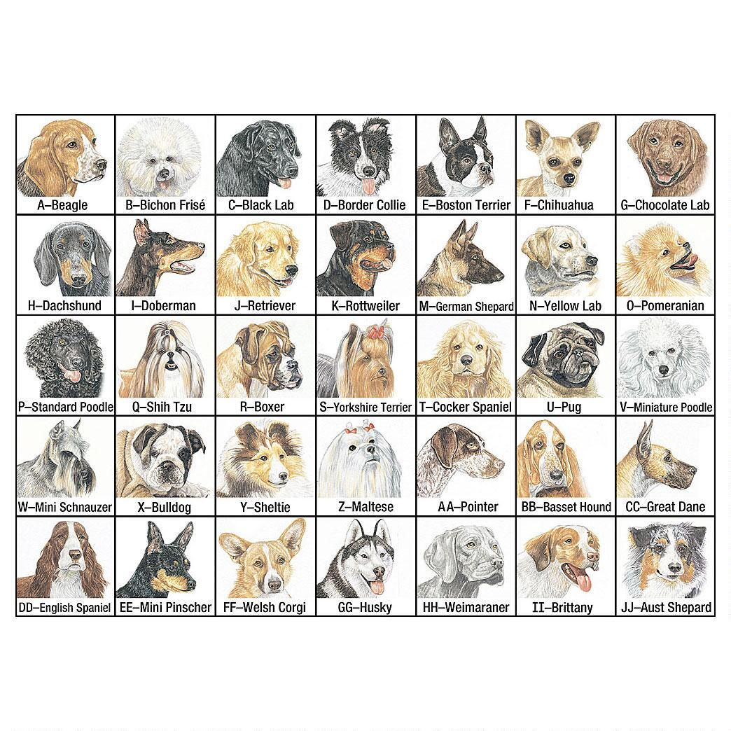 Don Eberhart Pet Portrait Memo Pad Set
