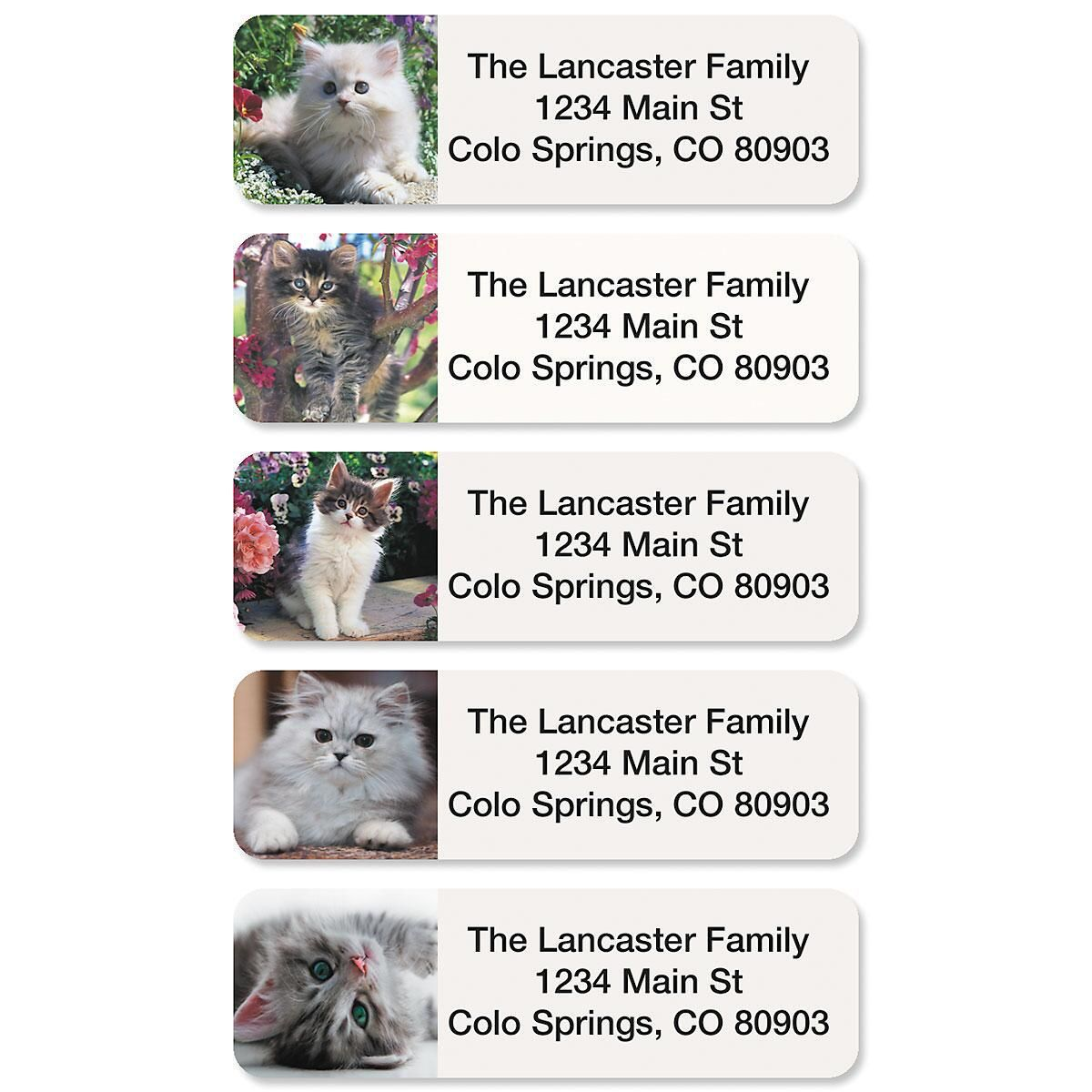 Cute Kittens Rolled Return Address Labels  (5 Designs)