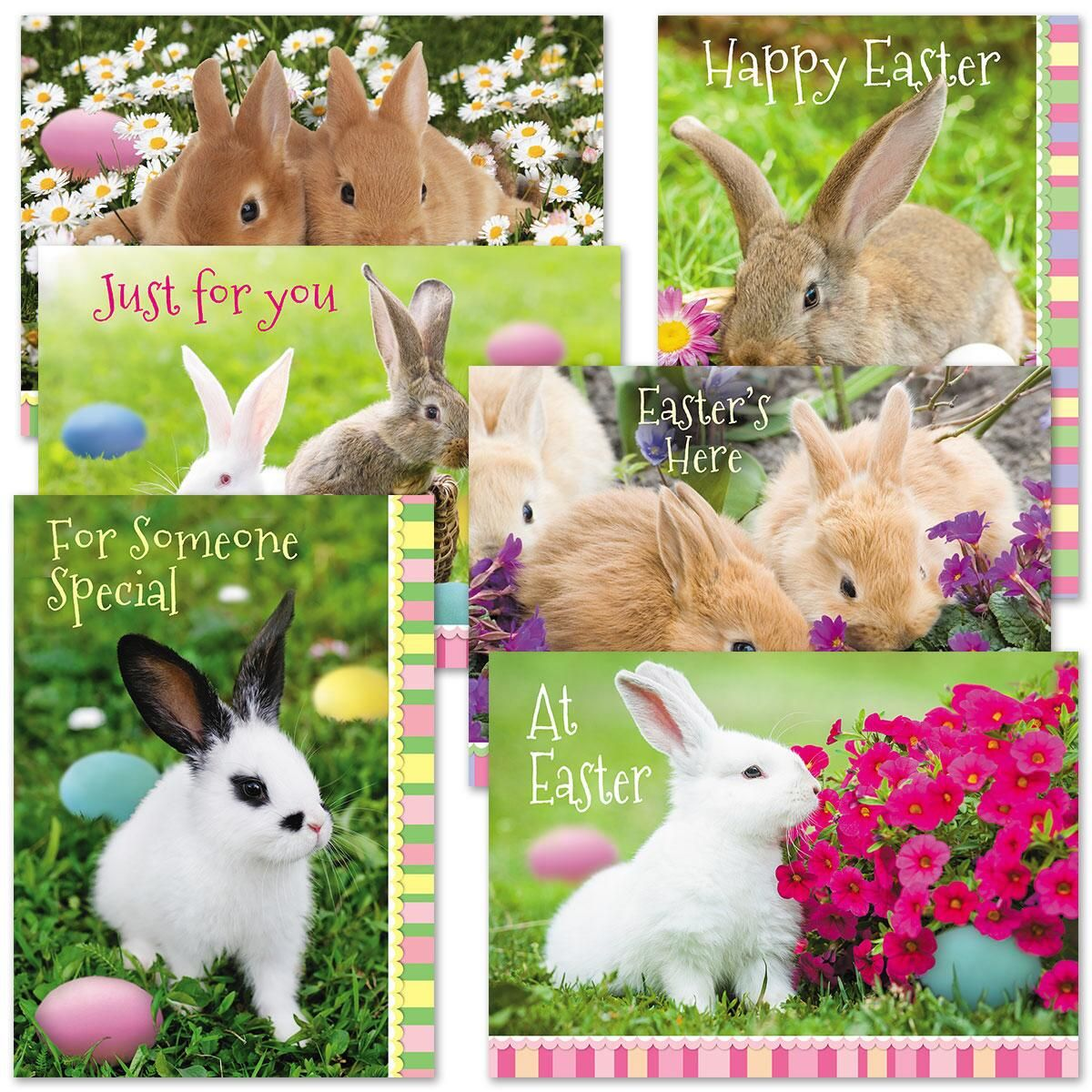 Photo Bunny Cards