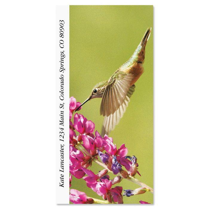 Calliope Hummingbird  Oversized Return Address Labels