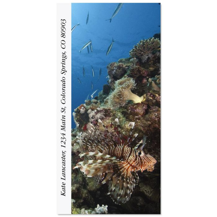 Lionfish Oversized Return Address Labels