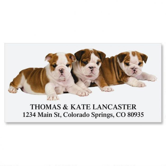English Bulldog Puppies Deluxe Return Address Labels