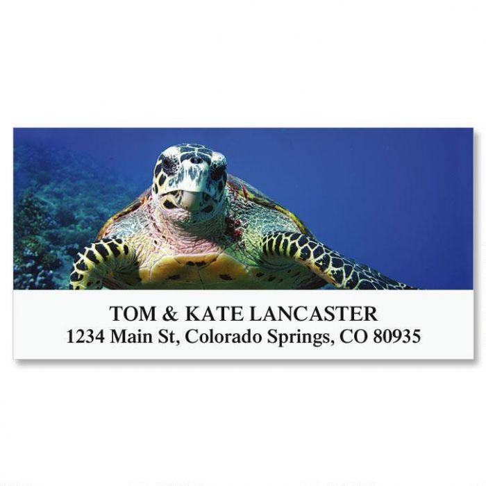 Sea Turtle Deluxe Return Address Labels