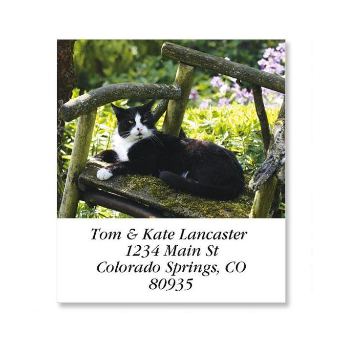 black white cat in chair select return address labels
