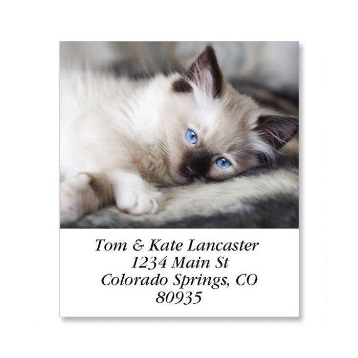 Old Blue Eyes Select Return Address Labels