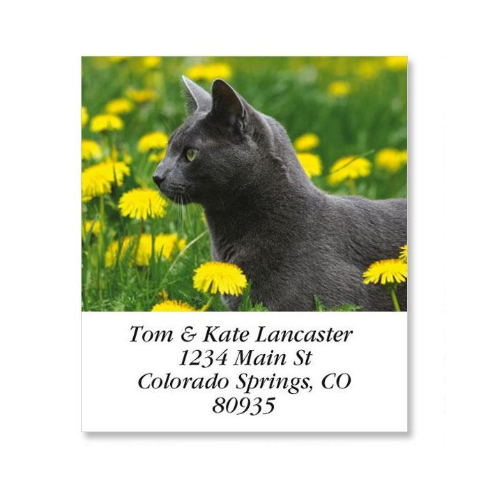 Dandy Cat Select Return Address Labels