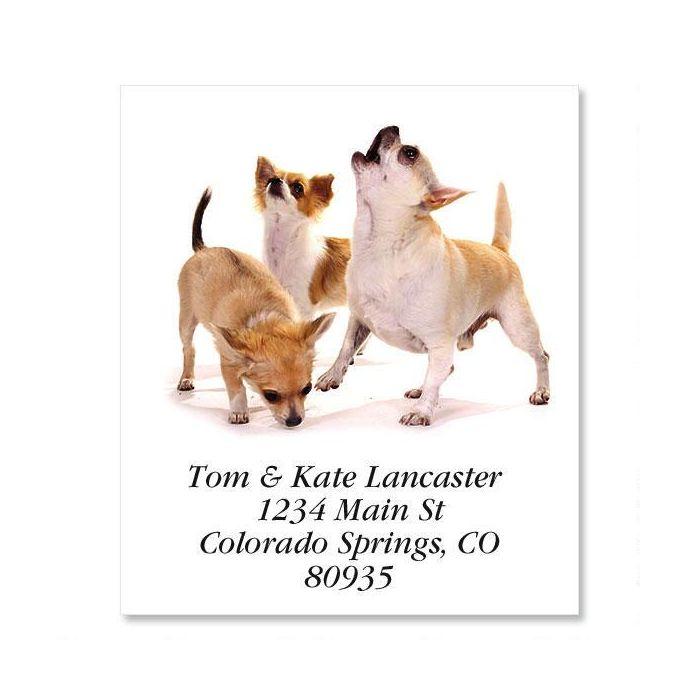 Chihuahuas  Select Return Address Labels