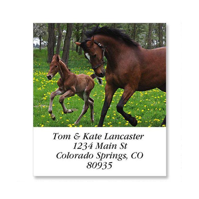 Horse Family Select Return Address Labels
