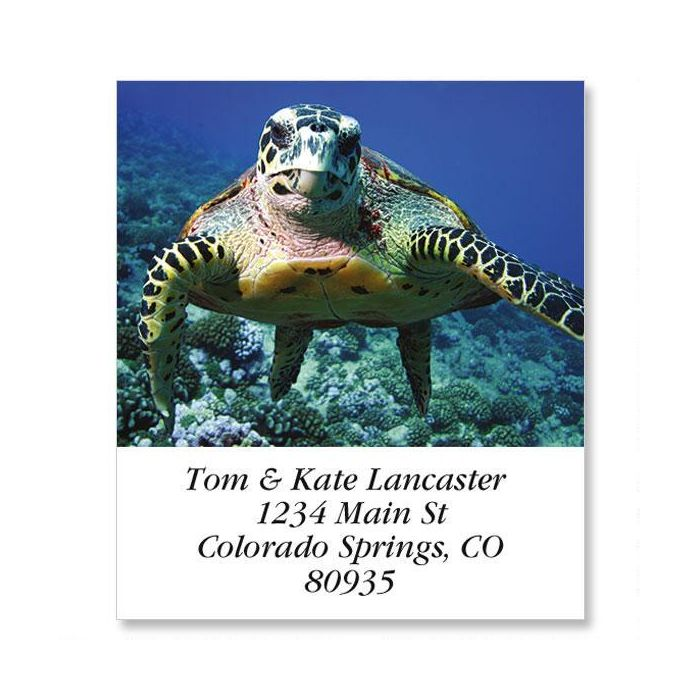 Sea Turtle Select Return Address Labels