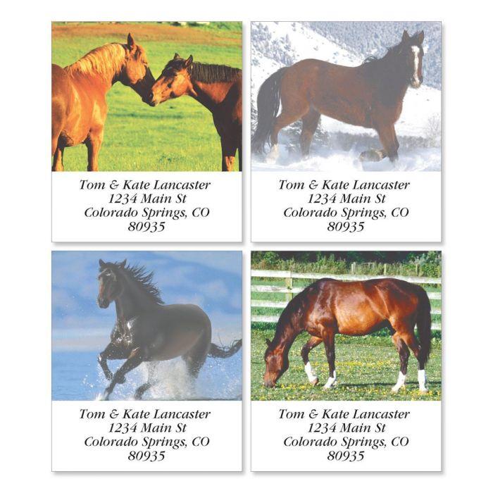 Horse Enthusiast Select Return Address Labels  (4 Designs)