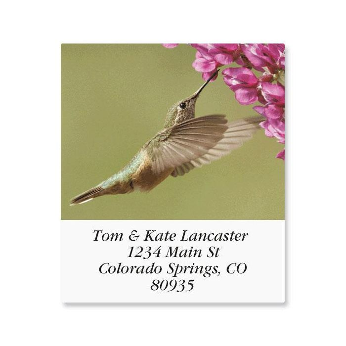 Birds of North America  Select Return Address Labels  (24 Designs)