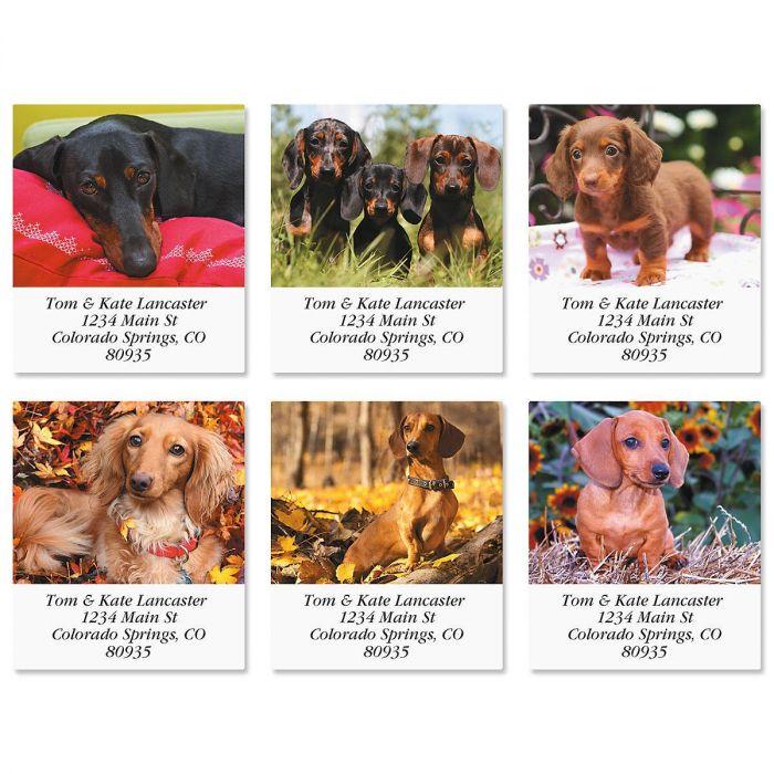 Dachshund Select Return Address Labels  (6 Designs)