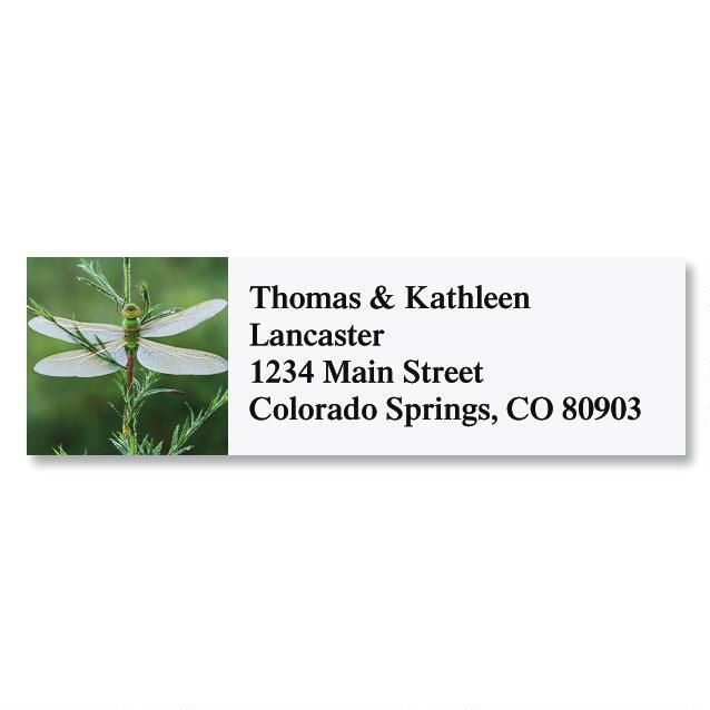 Darner Dragonfly Address Labels
