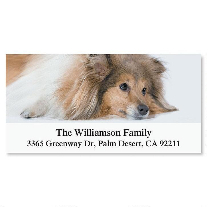 Sheltie Deluxe Address Labels