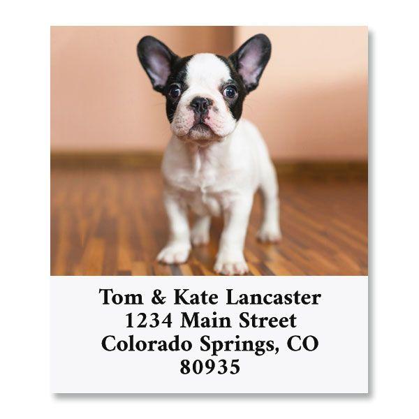 French Bulldog Select Return Address Labels
